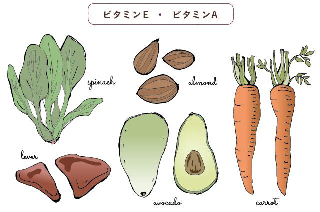 ビタミンE・ビタミンA:ほうれん草・アーモンド・レバー・アボカド・人参