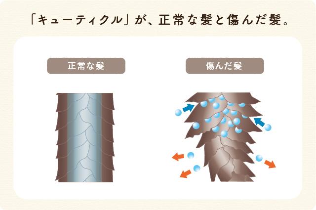 キューティクルが正常な髪と傷んだ髪:傷んだ髪はキューティクルが開き、そこから水分が入り髪の毛がうねりやすくなります。